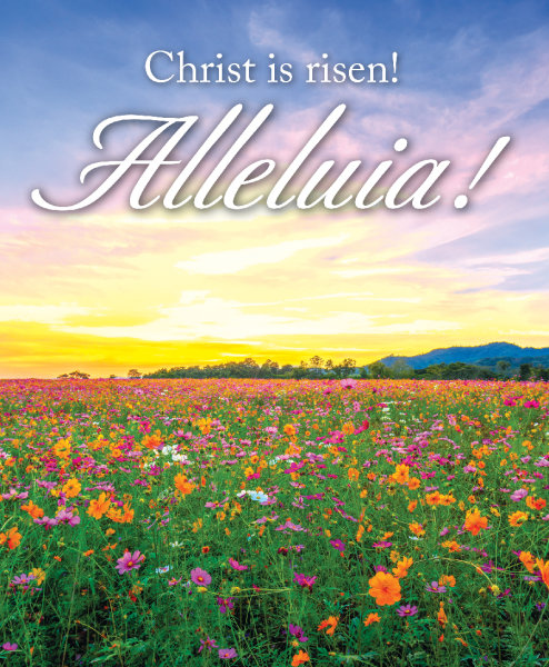 Alleluia Sunrise Bulletin, Large Size: Quantity per package: 100